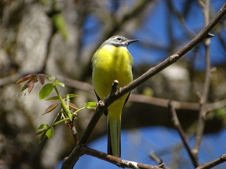 Ma van a madarak és fák napja